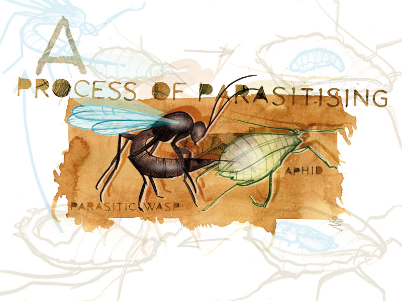 Parasitic wasps - Part 2 - Pests & Diseases